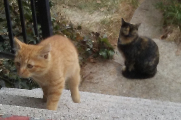 A ginger kitten kips up the stairs away from her watchful tortoise shell mom.