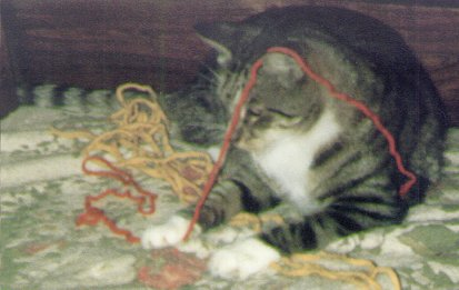 Tony the tiger tabby enjoying yarn and flowers in 1985.