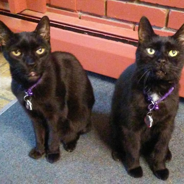 My Ninja Twins, a slinky black cat and a fluffy black cat.