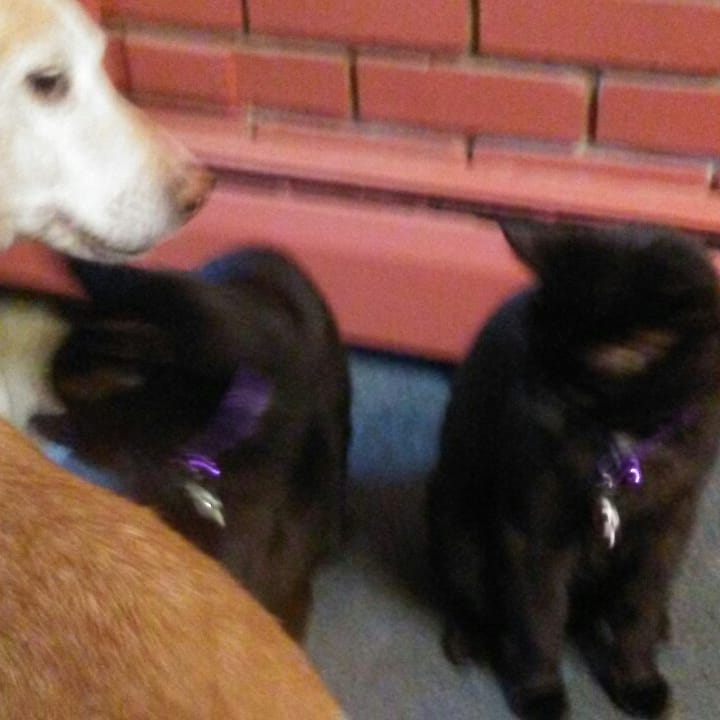 The Puppy stops in to visit with her cat brothers. No one is looking at the camera.