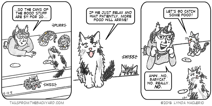 I'm explaining to the cats how much cat food costs. The fluffy calico suggests waiting for more food to arrive. The young tabby suggests catching food. With hearts in my eyes I fawn over her while still saying no. Like NO. The fluffy calico is looking up, as if for some food.