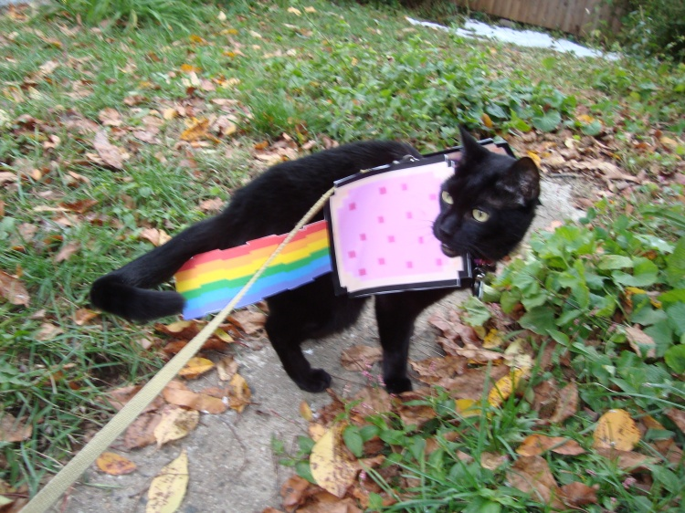 A black cat wears a paper printout of a Pop-Tart and rainbow, like Nyan Cat.