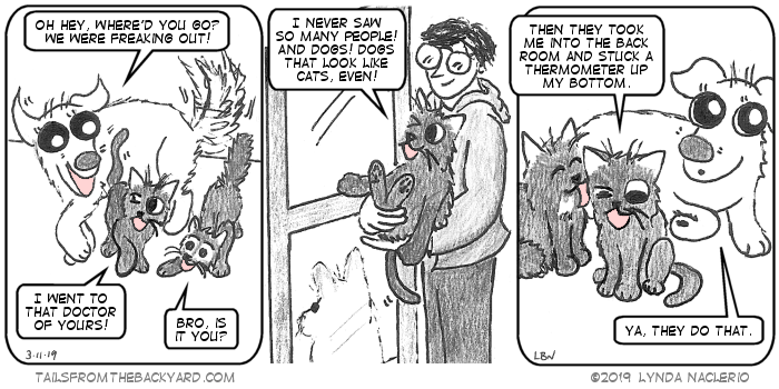 "The Puppy greets The Slinky One with a wagging tail. ""Oh hey, where'd you go? we were freaking out!"" she says. ""Bro, is it you?"" The Fluffy One asks, sniffing his bro. ""I went to that doctor of yours!"" The Slinky One declares. In the second panel, it cuts to me holding him at the door of the vet's office as he looks through to a dog outside. ""I never saw so many people! And dogs! Dogs that look like cats, even!"" In the third panel, it's now and he says, ""Then they took me in the back room and stuck a thermometer up my bottom."" His brother licks his face and the Puppy looks away and says, ""Ya, they do that."""