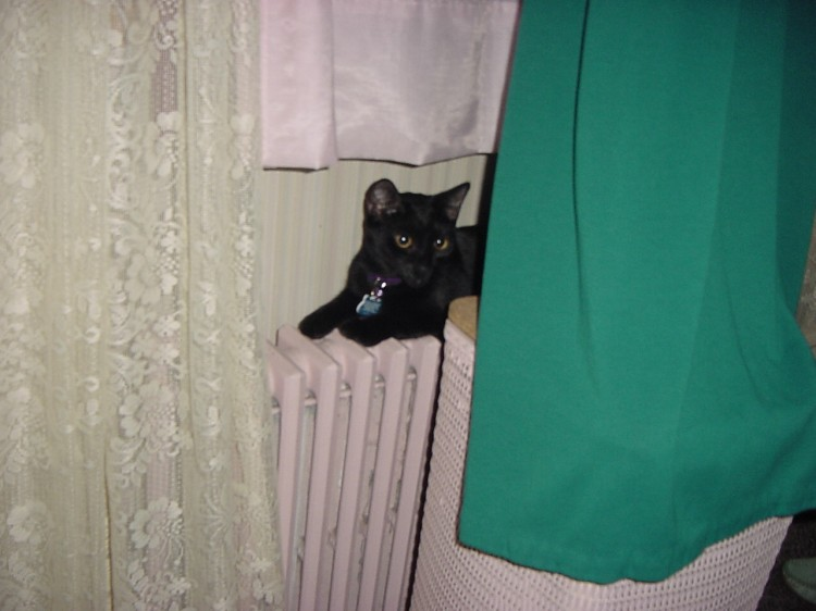 A black cat stretches out on a radiator.