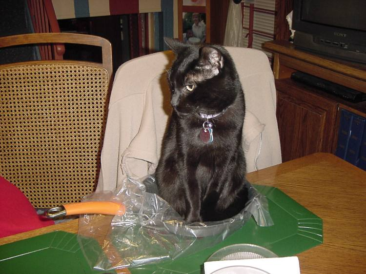 A black cat sits in a frying pan on a table.