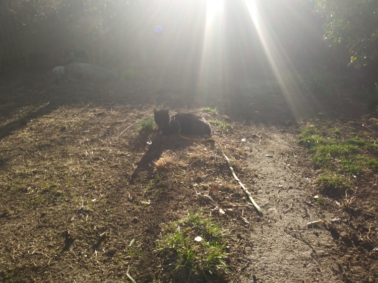 A photo of The Fluffy One loafing in the sun, by himself, two weeks after losing his brother. The sun is shining on him.