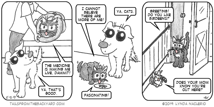 """In the first panel: The Fluffy One is wrapped in a towel, complaining to The Puppy that the medicine is making him live. The Puppy says, """"Ya, that's good."""" In the second panel: The Fluffy One is eating and telling The Puppy, """"I cannot believe there are more of me!"""" The Puppy rolls her eyes and says, """"Ya, cats."""" The Fluffy One says, """"Fascinating!"""" In the third panel: The Fluffy One is standing at the door, asking Babycat if she likes birdeens. Babycat asks him, """"Does your mom know you're out here?"""""""