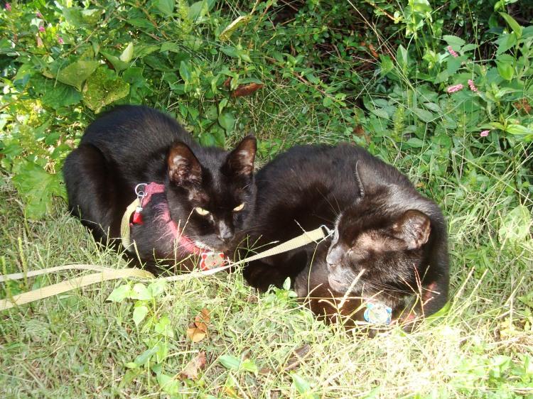 The Ninja Twins lounging in the sun near some catnip.