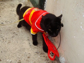 The Fluffy One in a firefighter costume.