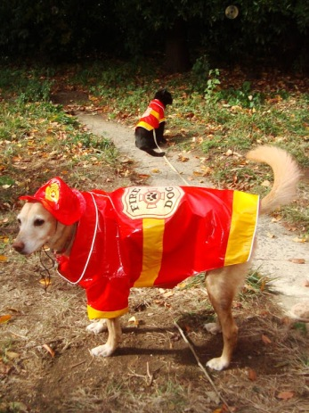 The Puppy and The Slinky One in firefighter costumes.