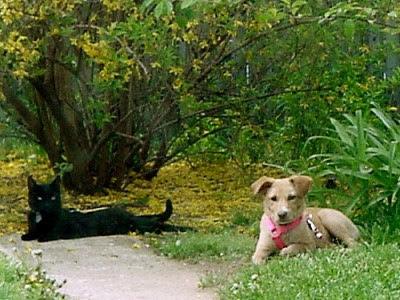 The real Slinky One and Puppy hanging out in the yard, Spring of 2006