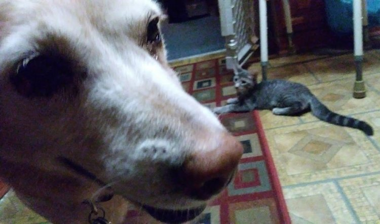 The real-life Puppy with The Kitten behind her.