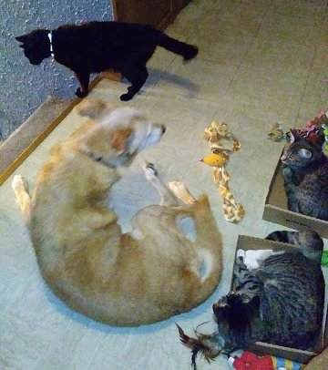The real-life Puppy, Fluffy One, Babycat, and Kitten all together in one photo for a split second.