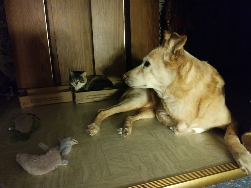 The real-life Puppy and Babycat hanging out.