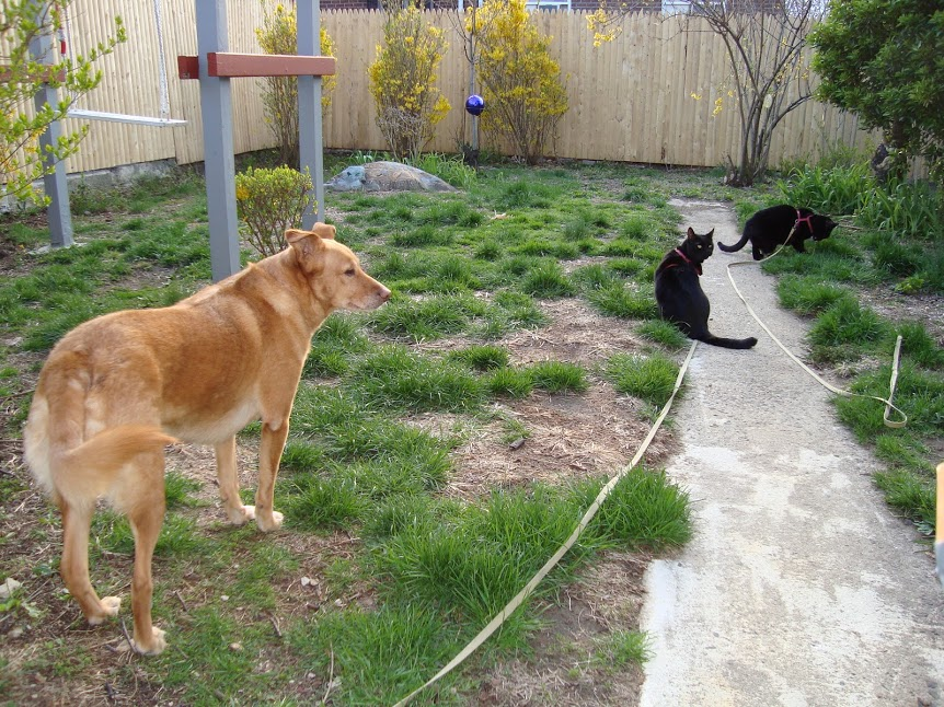The real-life Puppy with the real Ninja Twins in the real backyard, in Spring of 2011.
