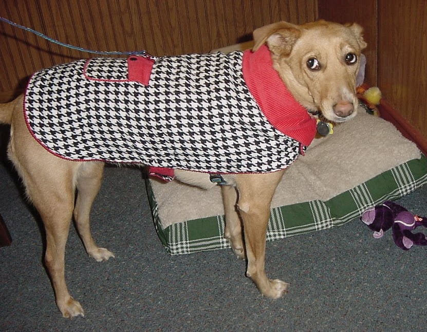 The real-life Puppy wearing her jacket, ready to go walkies.