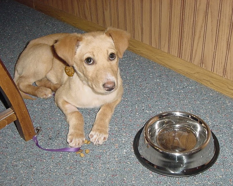 The Puppy as a puppy!