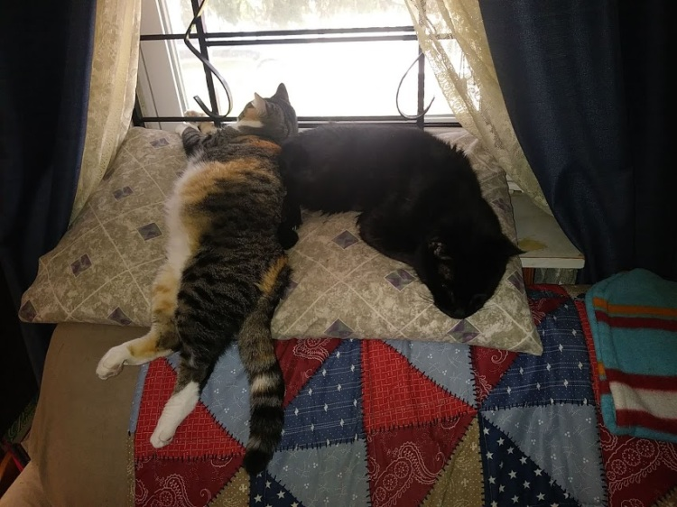 The real Babycat and Fluffy One lounging at a window.
