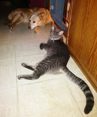 The actual Kitten and Puppy hang out in the hallway.