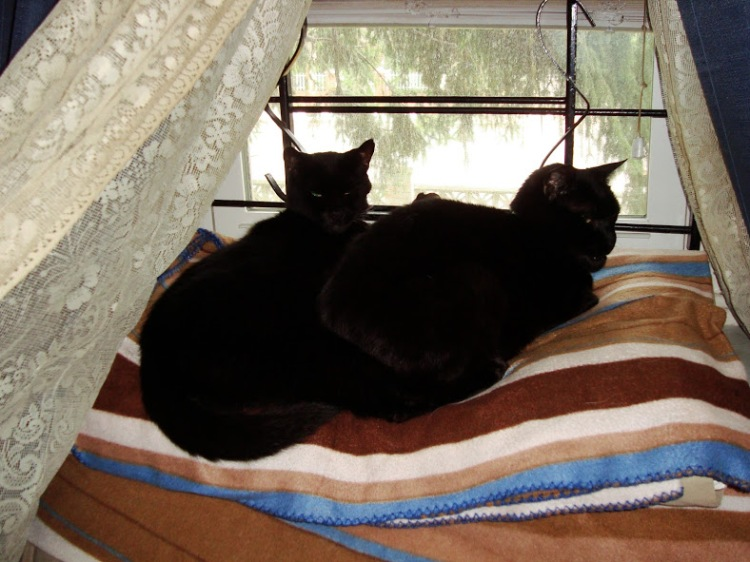 The actual Ninja Twins cuddled up on the window years ago.