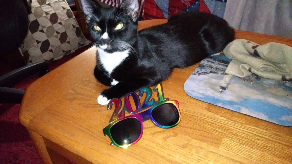 A photo of a tuxedo kitten with a white nose posing next to the 2021 glasses.