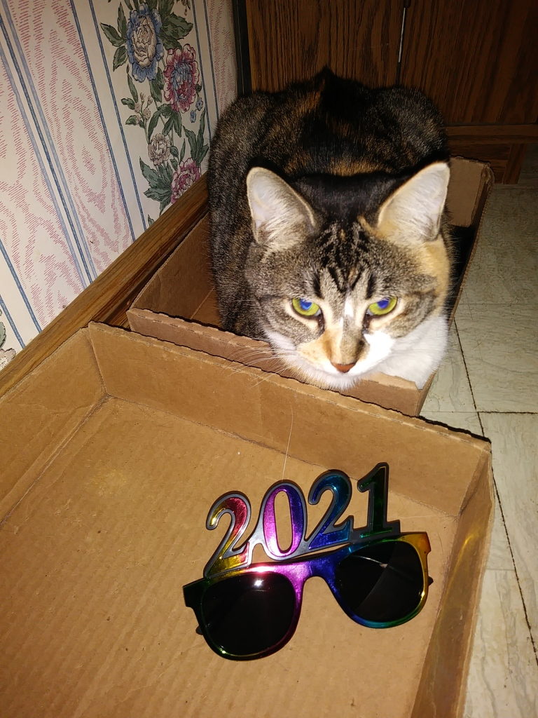 A photo of Babycat, a calico tabby, loafing in a box with 2021 glasses in a neighboring box.