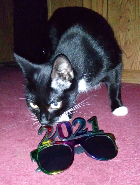 A photo of a mom tuxedo cat sniffing the 2021 glasses.