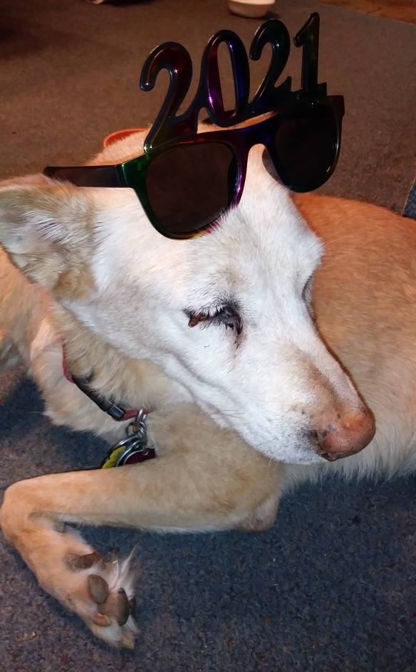A photo of The Puppy, a tan dog with a white muzzle, wearing 2021 glasses.