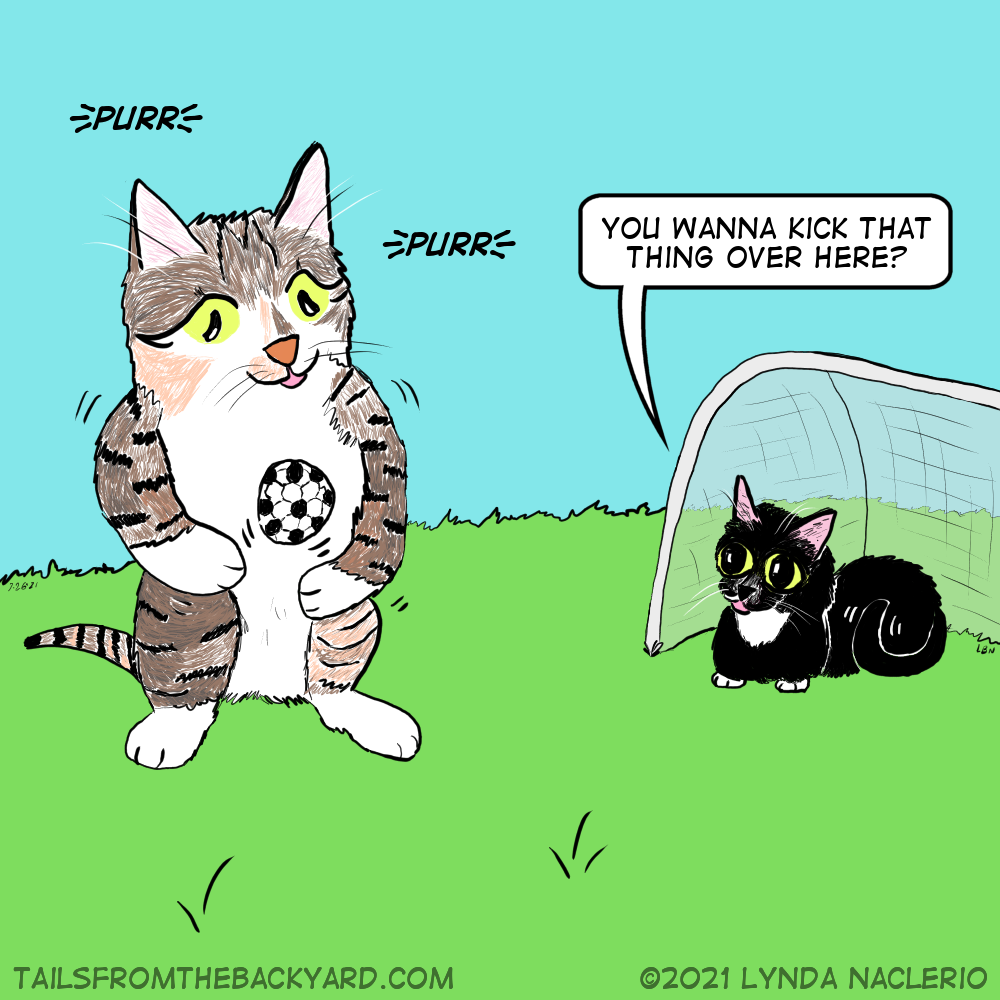 """A calico tabby purrs and juggles a soccer ball while a tuxedo cat watched from inside the goal net. """"You wanna kick that thing over here?"""" The tuxedo girl asks the calico tabby girl."""