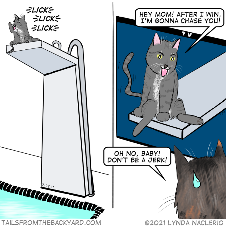 """A grey tabby sits on a high diving platform, licking himself. In the second panel, he's shown on a TV saying, """"Hey mom! After I win I'm gonna chase you!"""" A calico tabby sweats and says, """"Oh no, baby! Don't be a jerk!"""""""
